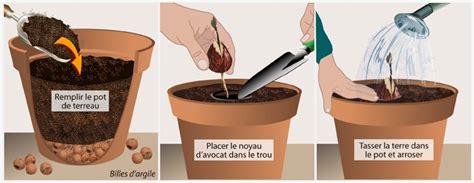 Comment Faire Pousser Un Avocat Avec Un Noyau by Faire Pousser Un Avocat Jardinage
