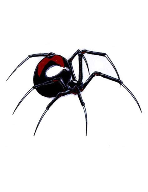 black widow spider tattoo designs black widow designs newhairstylesformen2014