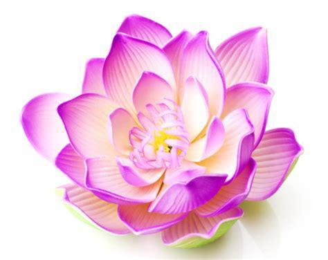 white lotus day spa point on being present spiritquest retreats