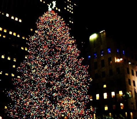 outdoor christmas tree in the city pictures photos and