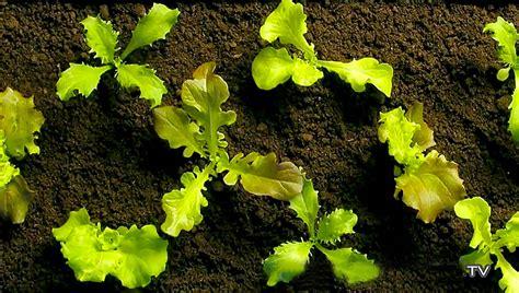 Gartengestaltung Gräser by Pflanzen In Nanopics Pflanzen Gr 227 Ser