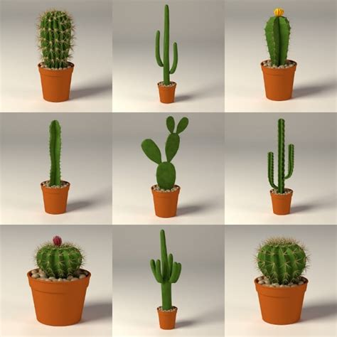 cactus pots cactus pot max