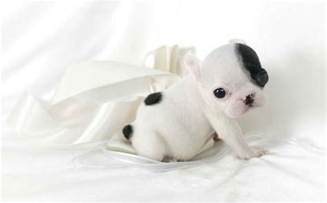 show me pictures of baby puppies 50 incredibly baby animal pictures around the world
