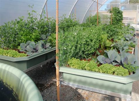 Aquaponics Backyard by Backyard Aquaponics Aquaponics