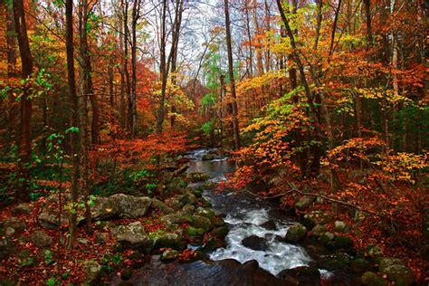 smoky mountain fall colors smoky mountains fall photography autumn with