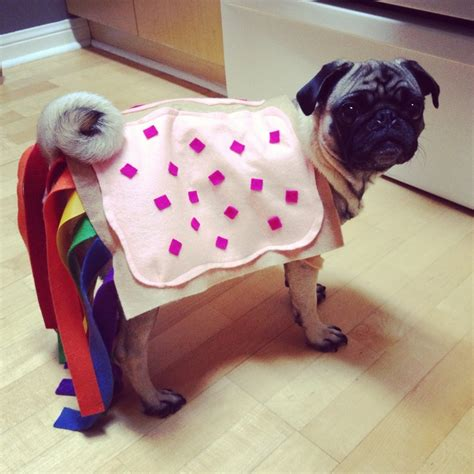 pug costume for baby 39 best pugs in costumes d images on adorable animals doggies and baby