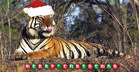 julian sykes wildlife holidays merry christmas happy