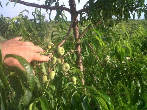 farm photos localharvest