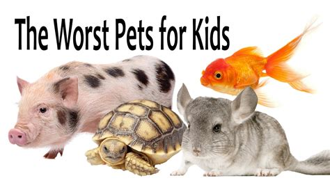 7 Kid Friendly Pets by Kid Friendly Fish Pets