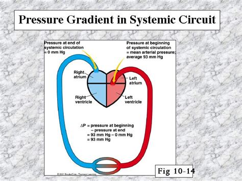 what is a circuit pressure gradient in systemic circuit