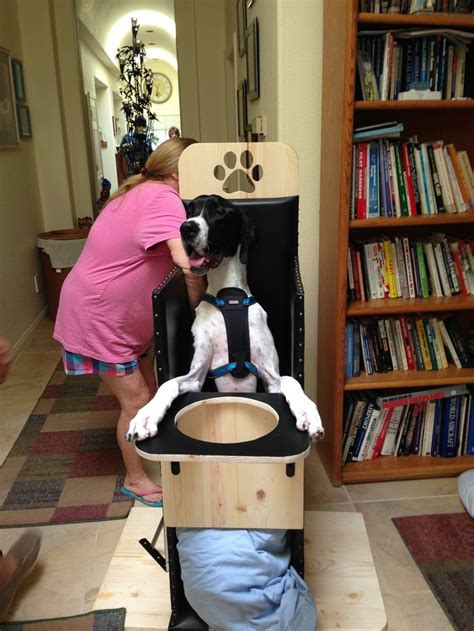 great dane in a bailey chair i my