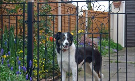 how to dogs to stay in yard your to stay in the yard