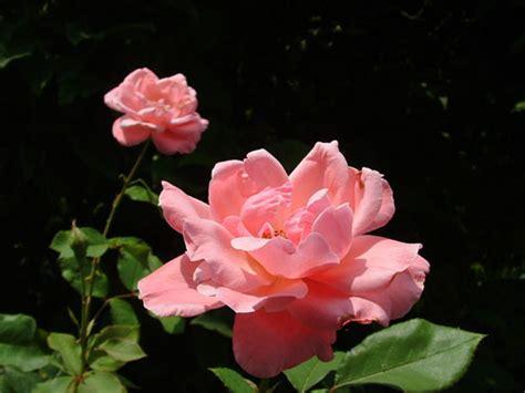 imagenes flores raras flores raras esp 233 cies e cores meio ambiente cultura mix