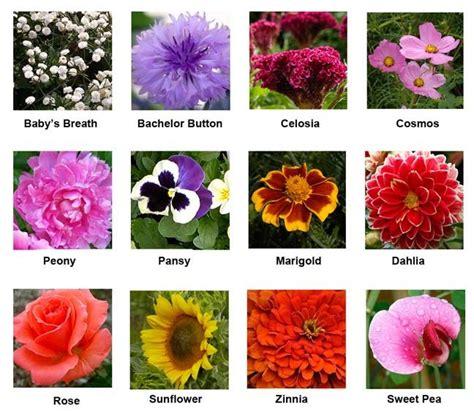 cut flowers  grow good   backyard jazzed