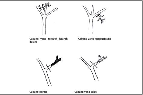 cara membuat zpt auxin ingin tanaman berbuah di luar musim simak tips berikut
