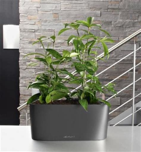 Window Sill Planter by Window Sill Planter Zeal Planters