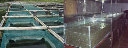 Tempat Pembelian Pakan Ternak info budidaya ternak merintis usaha budidaya ikan patin