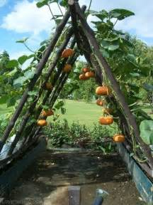 pumpkin trellis pumpkin trellis idea pictures photos and images for