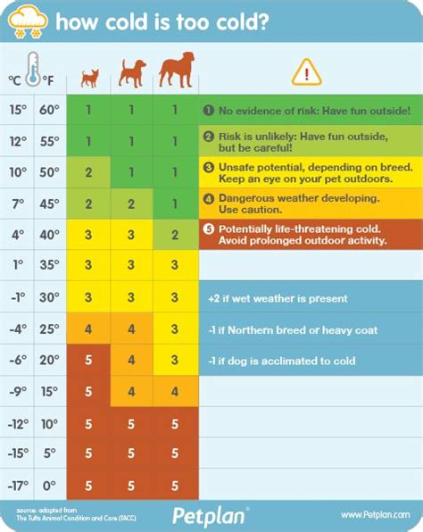 how does a pug stay in heat 25 best ideas about temperature on heat in heat and amazing