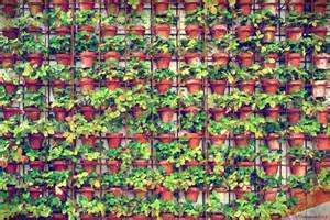 vertical gardens buildipedia