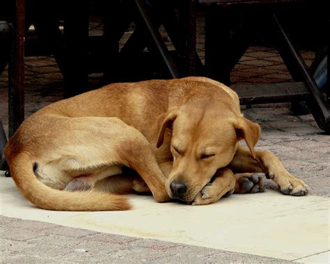 let sleeping dogs lie file let sleeping dogs lie jpg wikimedia commons