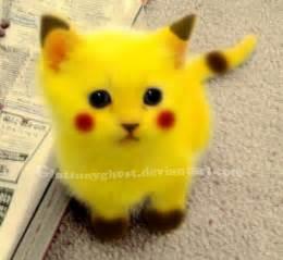 pikachu cat by gluttonygh0st on deviantart