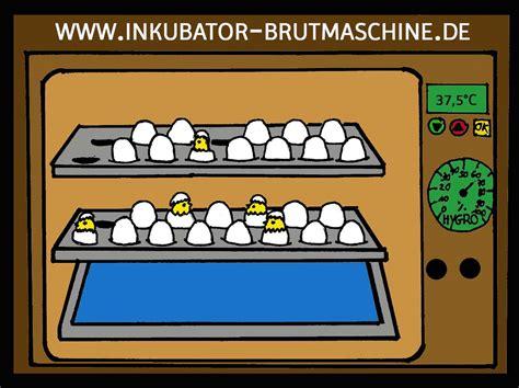 brutkasten selber bauen 2256 brutkasten selber bauen brutkasten selber bauen vom ei