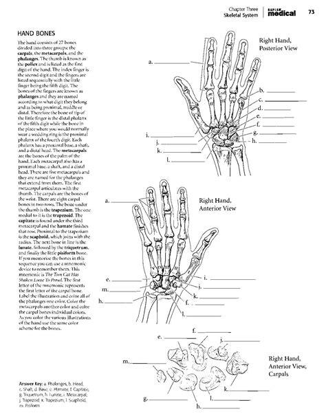 human anatomy coloring book pdf kaplan anatomy coloring book pdf boudli