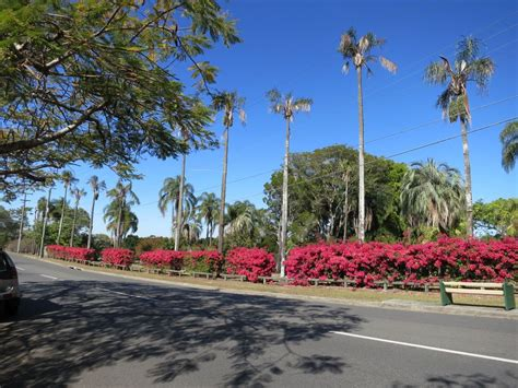 thomas park bougainvillea gardens environment land