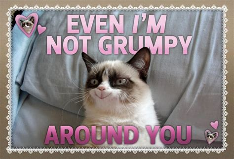 valentines grumpy cat 132 best images about grumpy cat on the