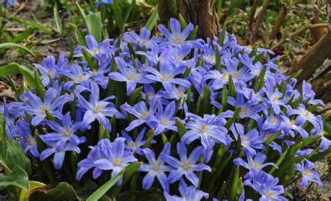 bloemen bestellen deventer bloembollen bestellen imkervereniging deventer