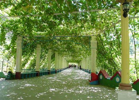 Grape Garden by Grape Garden Turpan Grape Valley Travel Photos Images