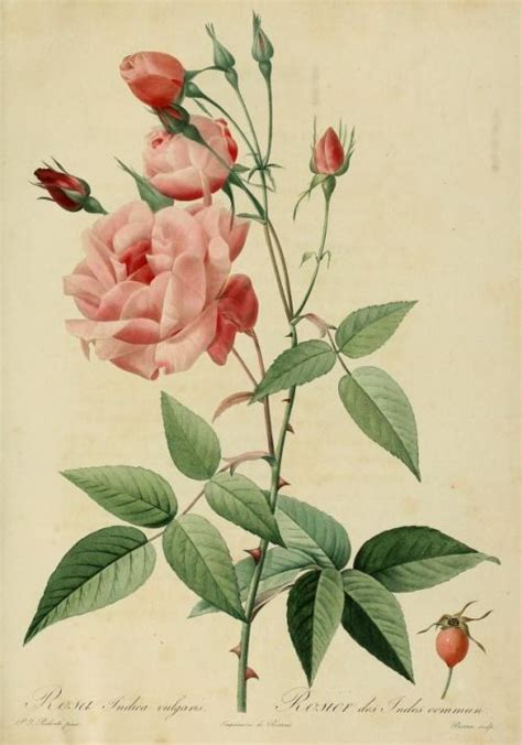 Vintage Flower L by 1000 Images About Botanical And History