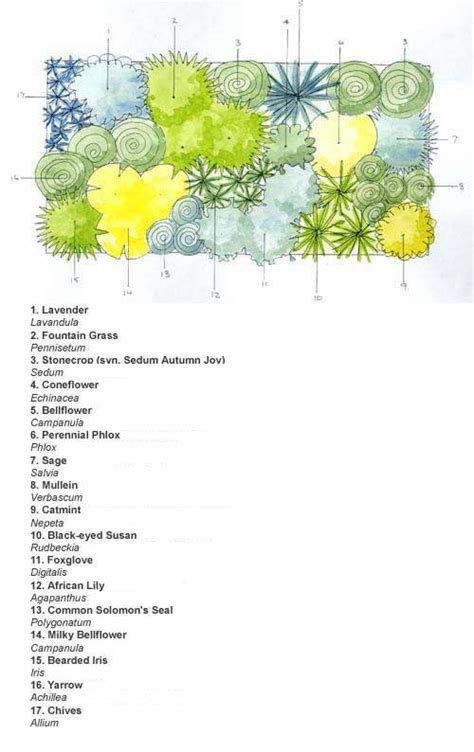 Cottage Garden Planting Scheme by Ready Made Border Cottage Garden Scheme
