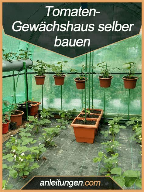 Tomaten Gewächshaus Selber Bauen Anleitung by Tomaten Gew 228 Chshaus Selber Bauen Tomaten Z 252 Chtet Am