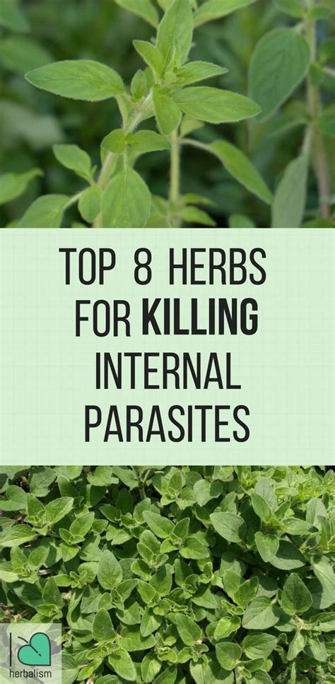 Parasite Detox Time At Age 38 by Best 25 Parasite Cleanse Ideas On Homeopathic