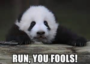 Sex Panda Meme - adorable animals cute fools funny image 401492 on