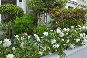 Fragrant Jasmine Plants - right rose right place roses for north facing walls sarah raven