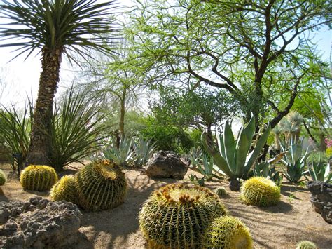 7 beautiful drought friendly lawn alternatives xeriscaping