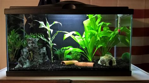 odeur plante aquarium d 233 butant forum aquarium