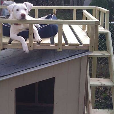 build  dog house  home depot