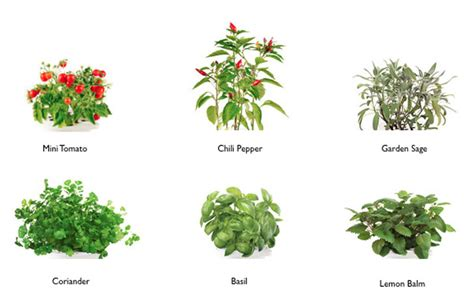 this smart herb garden lets you click grow freshome com click grow smart herb garden s second generation lets