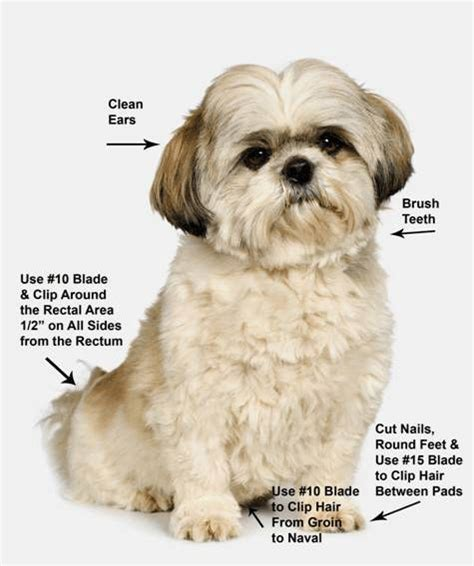 shih tzu pet grooming shih tzu grooming four dvds pets and style