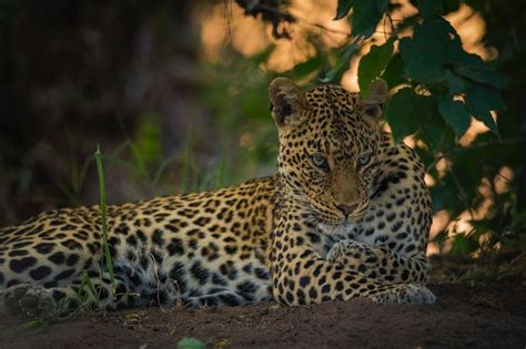 by chris oliphant on 500px amazing photos pinterest chris softly by chris fischer photo 179884799 500px