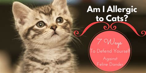 am i allergic to my am i allergic to cats 7 ways to defend yourself from dander
