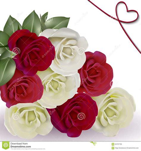 imagenes de blancas poringa rosas blancas y rojas en el fondo blanco stock de