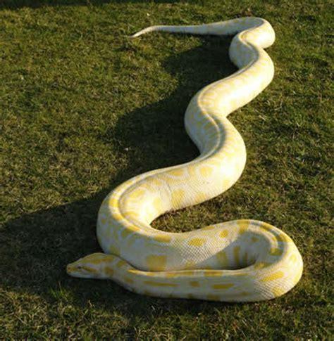 imagenes asombrosas de serpientes monstruos reales encontrados en el mundo hidra real