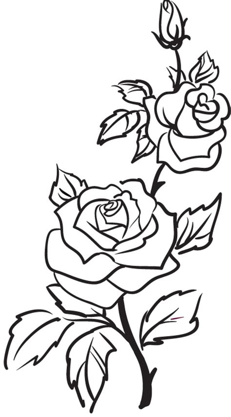 simple rose tattoo outline two roses outline rose flowers wall stickers wall art