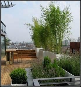 sichtschutz terrasse pflanzen pin holzterrasse mit pflanzungen on