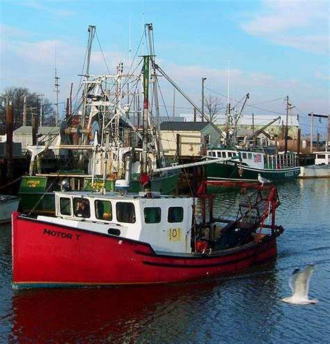 port boat sea gulls welcoming small fishing boat to port love s